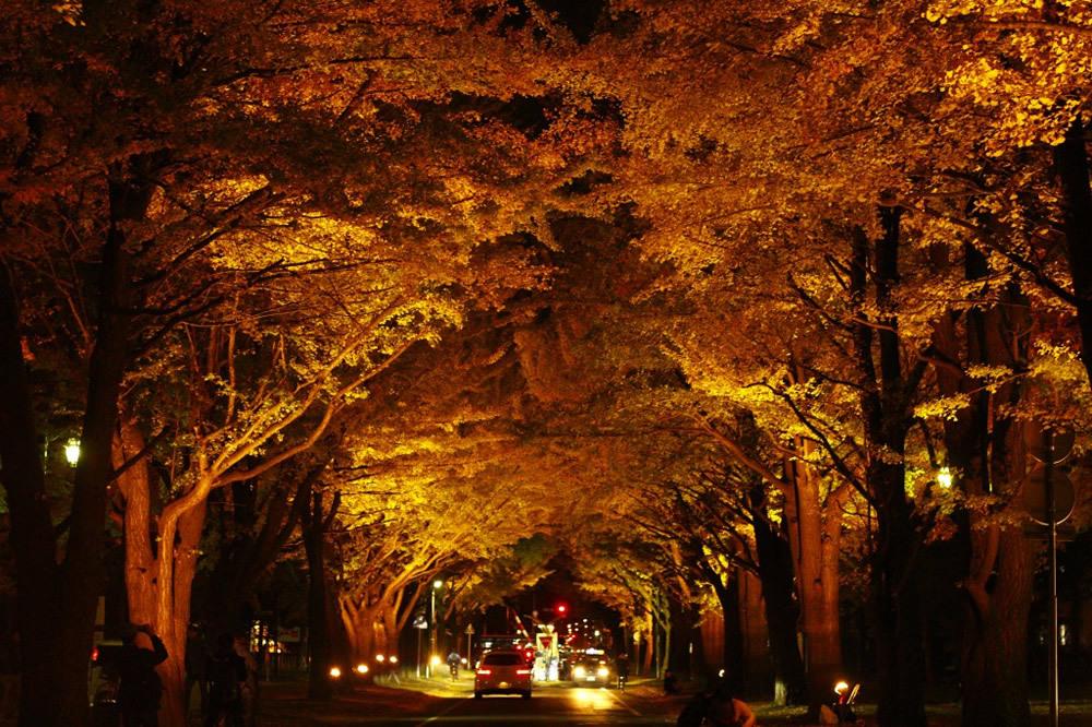 第6回北大金葉祭/北海道大学構内銀杏並木